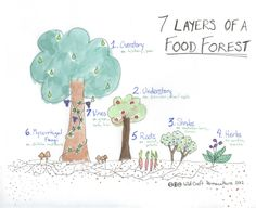 London's Carolinian Food Forest: 7 Layers of a Food Forest