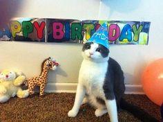 B'Day Cat