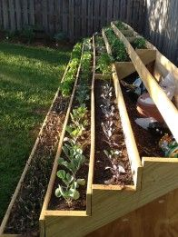 Beautiful Step Garden from Lisa --> http://www.hgtvgardens.com/photos/steps-gardening-by-lisa-shy-0000013f-1ada-d38b-a33f-7fdfa8dd0000?soc=pinterest