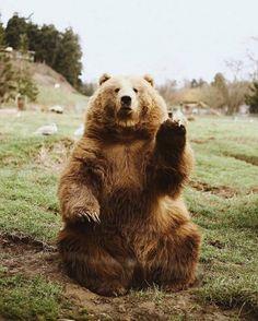 Oh Hi Bear