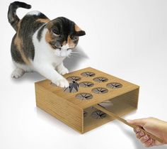 Cats Toys Ideas - Best Cat Toy Ever? Cat Whack a Mole Matej Vajda Vajda Musulin Silva you should build this! - Ideal toys for small cats Diy Cat Toys, Crazy Cat Lady, Crazy Cats, Cool Cats, Diy Pour Chien, Diy Jouet Pour Chat, Bb Chat, Gatos Cool, Ideal Toys