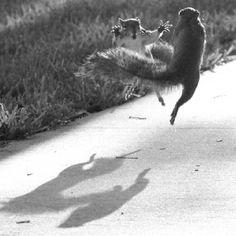 Ninja Squirrels (Orlando Sentinel, photo by Ian Baker)