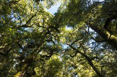 オールポスターズの マイケル・メルフォード「Vegetation on Hump Ridge Track, a Three-Day Hiking Trail in Fiordland National Park」写真プリント