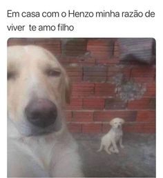 Ahh que fofo 😍♥ Animals And Pets, Funny Animals, Cute Animals, Otaku Meme, Disney Memes, Have A Laugh, Funny Relatable Memes, Best Memes, I Love Dogs