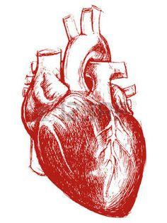 anatomy heart: Human Heart Drawing line work