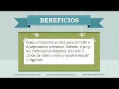 Beneficios, nutrientes y propiedades del jengibre. Más información en: http://www.remediocaseronatural.com/comidas-sanas-beneficios-jengibre.htm