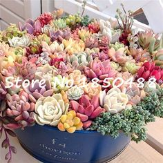 Bonsai flowers indoor fleshier plant, lithops stone flowers seeds, succulent seed, bonsai cactus plant  - 200 pcs seeds