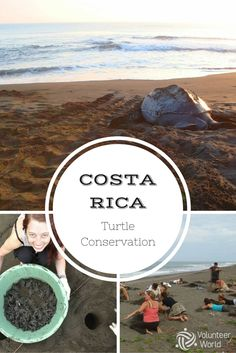 Help to protect endangered turtles in Costa Rica!