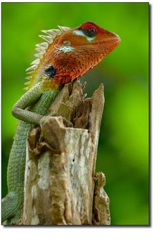 """""""The lizard that jumped from the high iroko tree to the ground said he would praise himself if no one else did"""" (21). This quote means that you show praise yourself for self accomplishments and that was Okonkwo does like being very strong and a manly man. And you can see the lizard jumping from the high trees."""