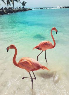 Pink flamingos at sea beach. TRavel Tips and Tricks. Found this cute flamingo photo while browsing :) Animals And Pets, Baby Animals, Cute Animals, Pink Animals, Exotic Animals, Beautiful Birds, Animals Beautiful, Beautiful Places, Cute Wallpapers
