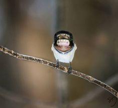Big Mouth Birds: My Newest Series Of Hybrid Animals | Bored Panda