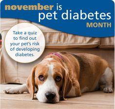 63 Best Diabetic pet images | Diabetic dog, Dogs, Diabetes