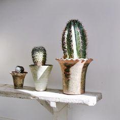 Love the cacti container garden.