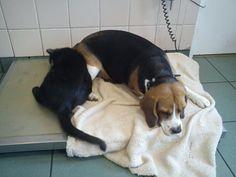 Kind-hearted Cat Nurses Sick Animals Better | Animal Equality