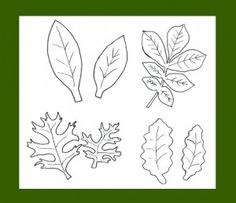 leaf templates (leaves with veins)