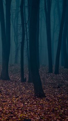 Spooky Autumn Forest Leafbed iPhone 6 Plus HD Wallpaper
