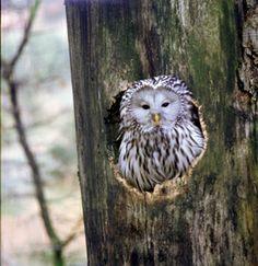 Sielmanns Natur-Ranger Deutschland e.V. | Tierkunde