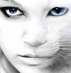 Cat and human morphing.