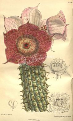 10 Vintage 1970s Cacti Succulent Book Plate Botanical Illustration Ephemera