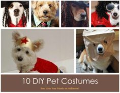 Create one of a kind costumes that are not as tricky to make as you might think.   Dress your pet in green style this holiday and you will be gobblin' up the savings while treating your pet to a lot of attention. We found some pretty unique ideas out there that we think even you can do! All you need