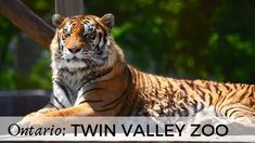 Twin Valley ZOO in Brantford, Ontario, Canada Family Day, Day Trip, Family Travel, Ontario, Paths, Travel Inspiration, Twins, Canada, Videos