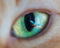 Andrew Marttila é especialista em clicar gatos e já fotografou felinos famosos!