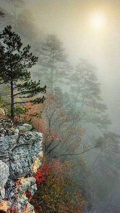 Arkansas autumn trees in the fog.