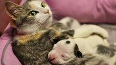 Cat 'Adopted' a Puppy in Heartwarming Story