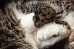 Kattenfotograaf Leiden - Cherished Friend Session kat Julius-12