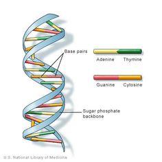 Tiivistelmä rakkaus soluja/dating DNA