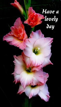 Beautiful Gladioli, have a happy day. #flowers. .. http://theSupergranny.net