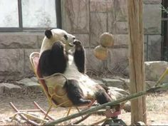 Panda in a rocking chair.  Really, can you beat that?