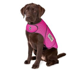 Buy ThunderShirt Sport Anxiety & Calming Solution for Dogs, Fuchsia, XX-Small at Chewy.com. FREE shipping and the BEST customer service!
