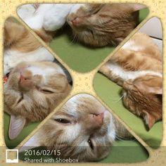 2016.02.14 #猫 #うち猫