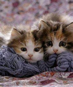 Worried Kitten Faces!