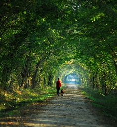 While I'm in Missouri, I would also visit the Katy Trail to bike ride on it. It's like a tunnel of trees. It's really pretty.