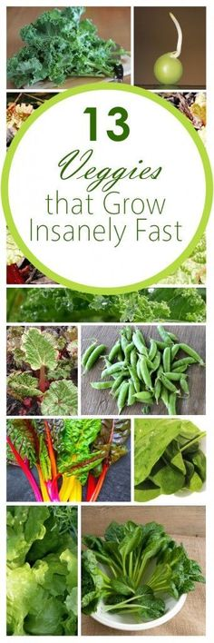 Fast growing veggies, fall gardening, fall gardening hacks, popular pin, vegetable gardening, gardening tips, gardening tips and tricks.