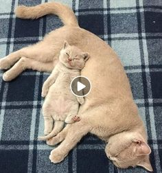 - Cute and Funny Pets - Funny Cat and Dog Videos Compilation Funny Cats And Dogs, Cute Cats And Kittens, Funny Animals, Cute Animals, Animals Dog, Cat And Dog Videos, Funny Cat Videos, Funny Cat Pictures, Pet Videos