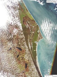 Brown tide continues to cloud up the Indian River Lagoon, threatening oyster restoration reefs and other shellfish