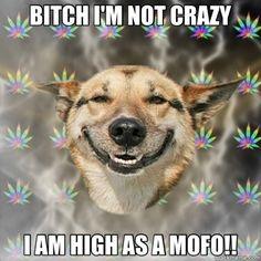 Crazy Stoner