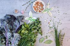 Pesto printanier aux fines herbes Pesto, Plants, Painting, Inspiration, Cheese Plant, Butcher Shop, Recipes, Biblical Inspiration, Painting Art