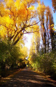 Speargrass Flats Road, New Zeland
