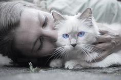 5 Ways you can tell your cat you love them in their own language. - One of the many subtle ways that our cats communicate their affection for us is through their tails.