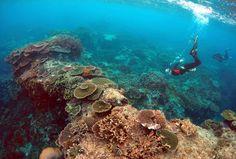 Ecología: Un estudio confirma los daños causados al mayor arrecife de coral del mundo. Buena parte de los daños están causados por el aumento de la temperatura del mar derivado del cambio climático
