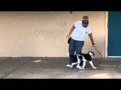 """""""Go Behind""""  Fairly easy to teach and it can be a lifesaver if your dog is shy or reactive to other dogs."""