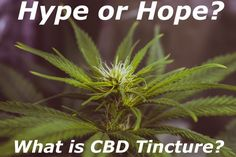 How does CBD interact with your body? What is inside a CBD Tincture? How to choose the best CBD Tincture? Keep reading to learn how CBD tincture can be beneficial to your health. Brown Glass Bottles, Cannabis News, Epilepsy, Over Dose, Herbs, Reading, Health, Health Care, Herb