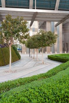 Abu Dhabi plaza by Martha Schwartz features teardrop-shaped landscaping