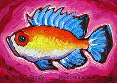 Fish Painting - Agustus Glubb - Fish Art Print from Original Painting by Tod C Steele - 5x7 via Etsy