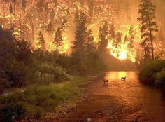animals running from a forest fire