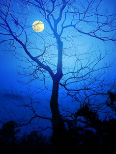 """Blue moon you saw me standing alone, without a dream in my heart, without a love of my own"""
